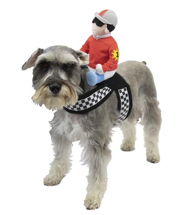 Horse jockey Halloween costume for dogs