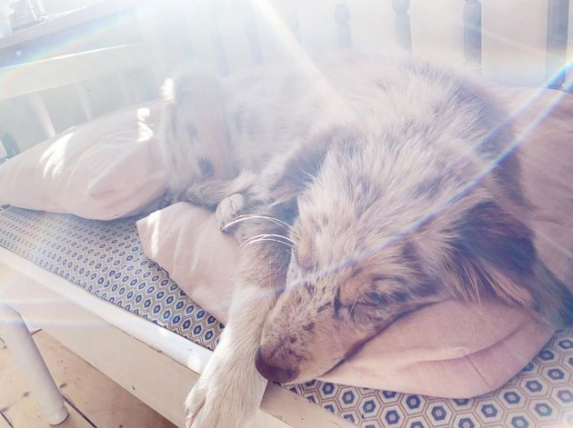 a dog in the sun
