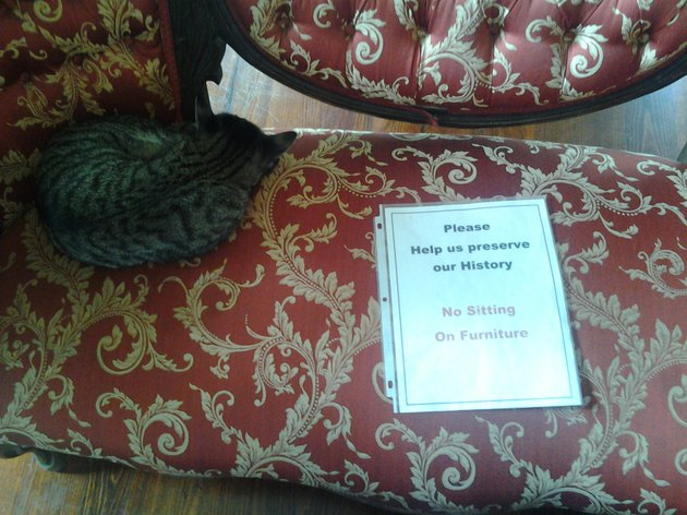 Cat sleeping on couch next to a sign asking people not to sit on the couch