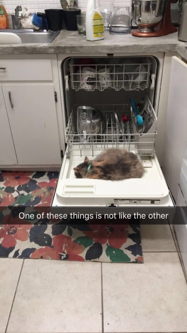 Cat sleeping on open dishwasher door