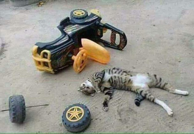 Cat sleeping by a kid's toy truck