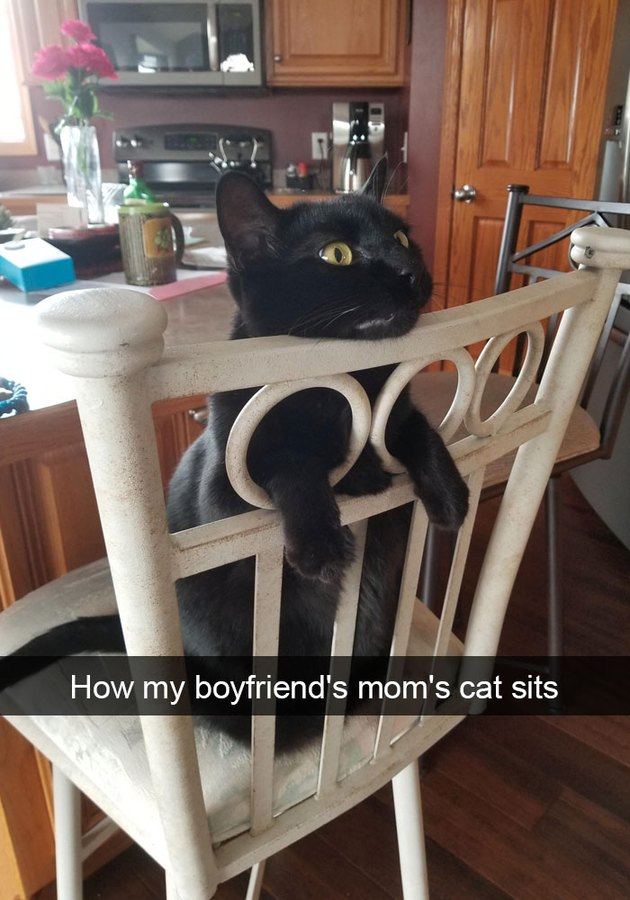 Cat sitting in a chair backwards so his arms poke out of the chair's back