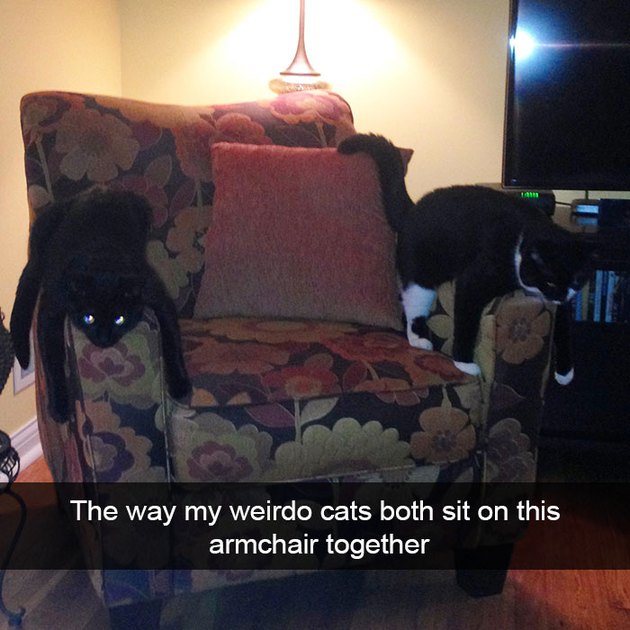 Two cats laying on chair's arms funny