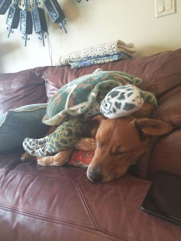 stuffed turtle on top of sleeping dog