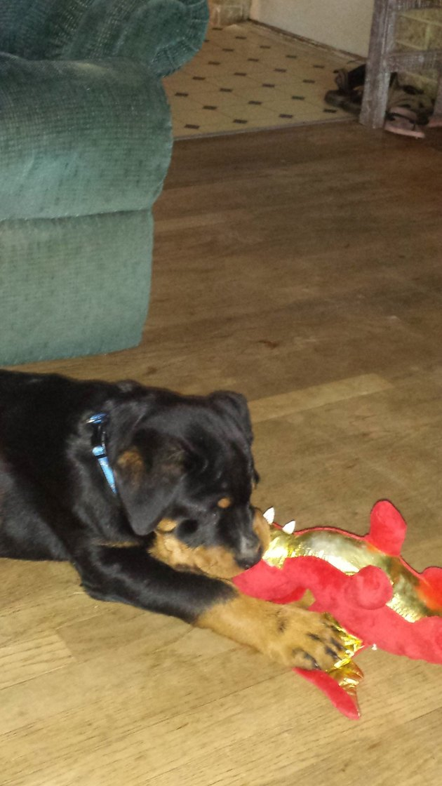 dog chews on stuffed dragon