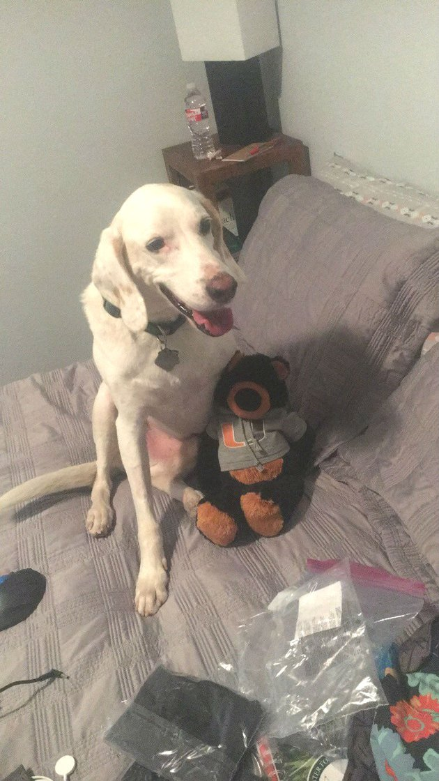 dog with stuffed bear