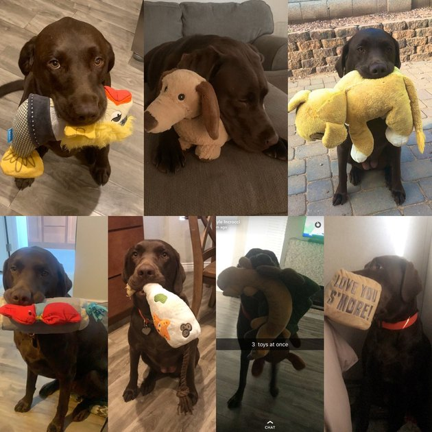 dog pictured with numerous stuffed animals