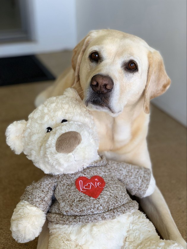 dog poses with favorite stuffed bear
