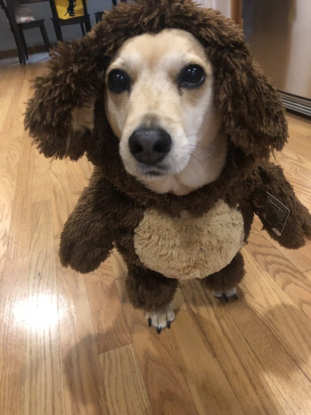 dog dressed in stuffed bear costume