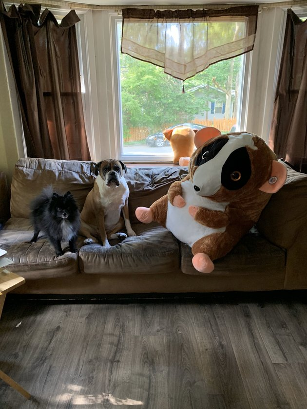 dogs on couch pictured with giant plush doll