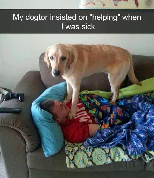 Dog standing on sick person on couch.
