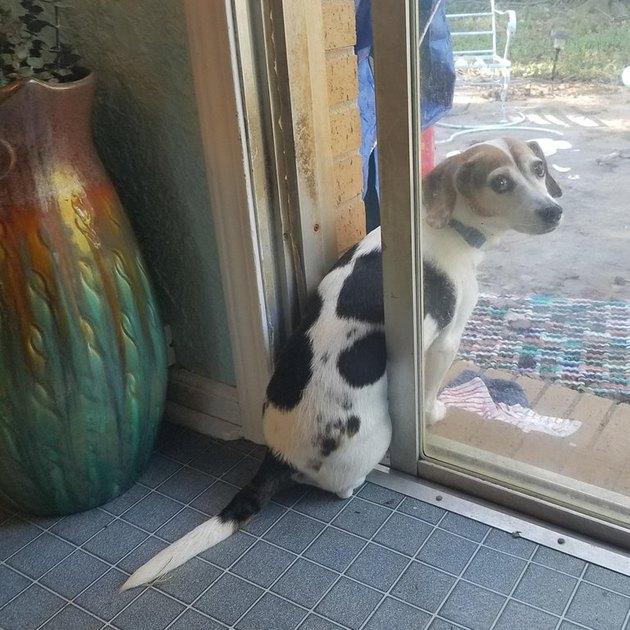 Dog sitting on threshold of door