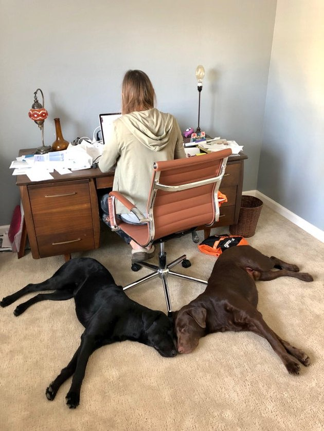 Two dogs lying directly behind a woman's desk chair
