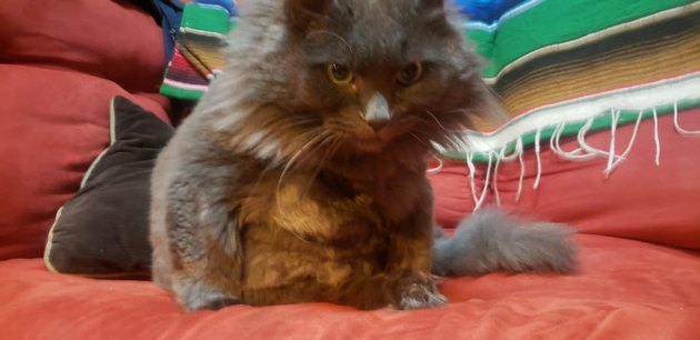 angry-looking cat named Moon Unit