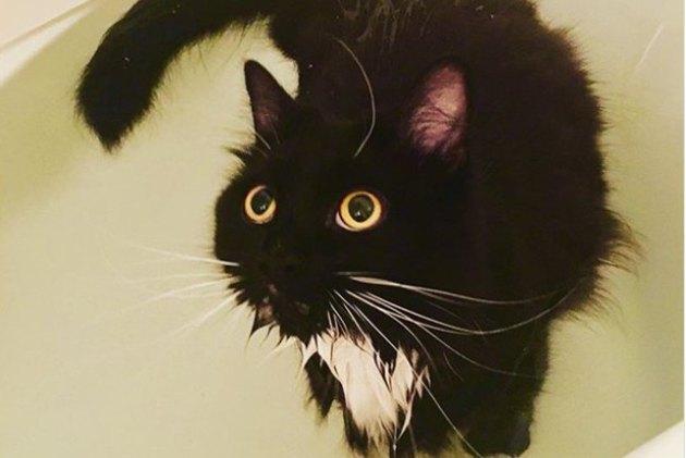 black and white cat in bath tub