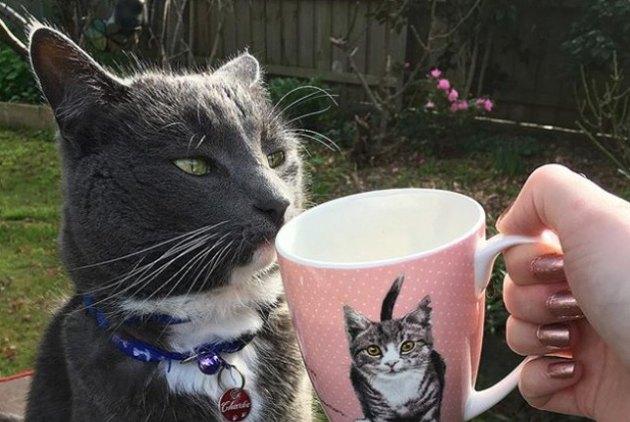cat sniffing cat mug