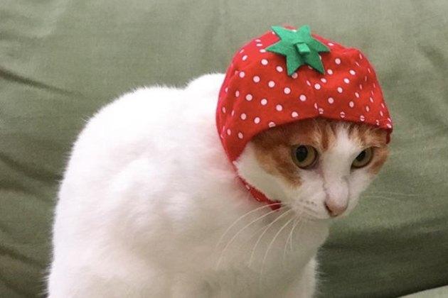 cat wearing strawberry hat