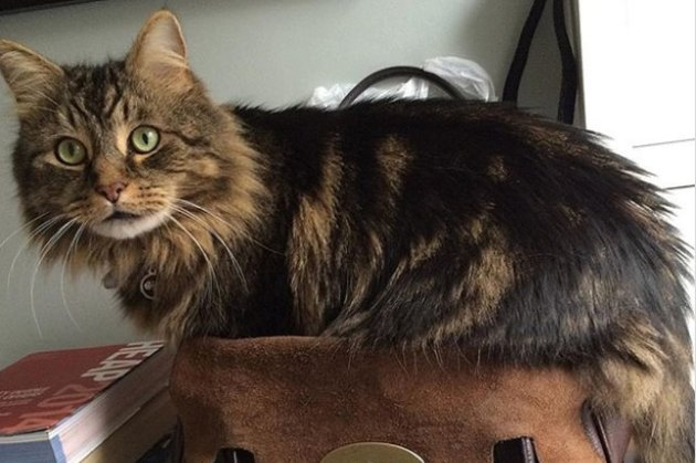 cat on a purse