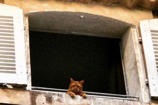 cat waiting in an open window