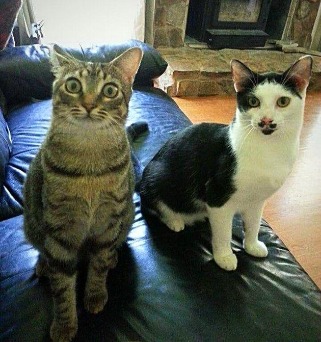 Surprised looking cat