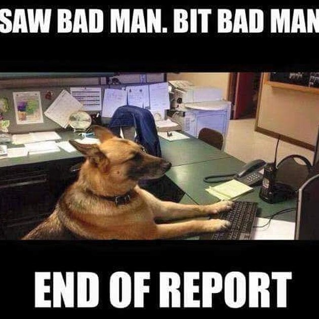 Police dog filing a report
