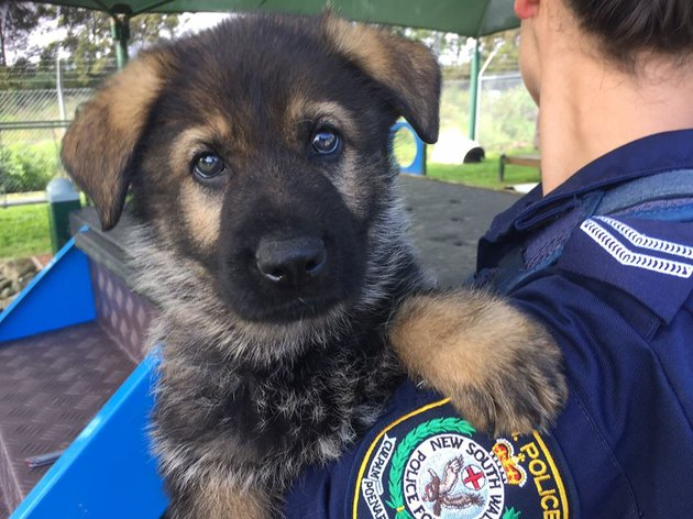 Puppy being held by police officer