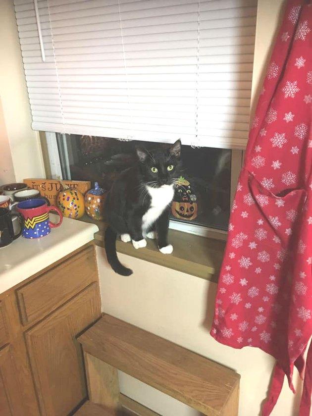 black and white cat named Castiel sitting on windowsill