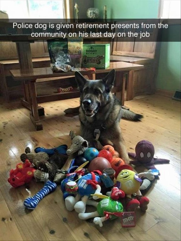 Retired police dog surrounded by toys