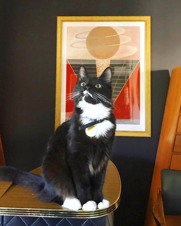 cat named Tuxedo Winnie in front of painting