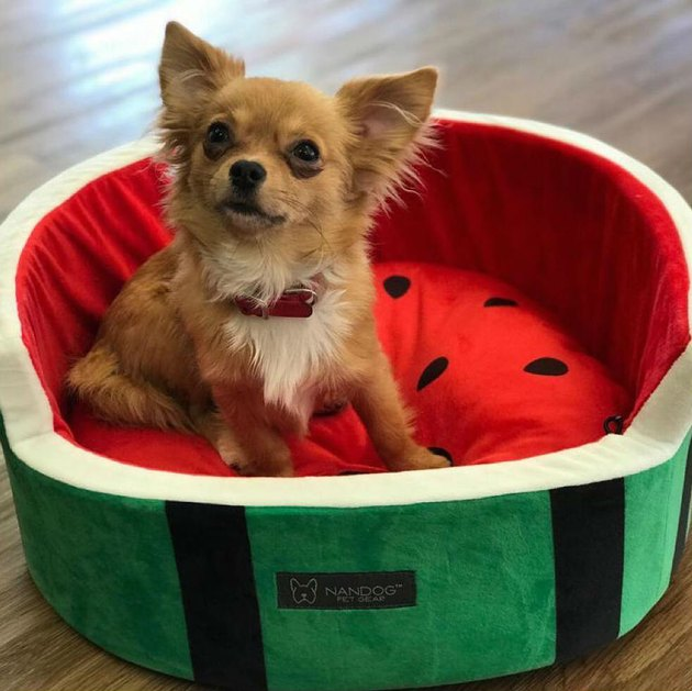watermelon-shaped bed for small pets