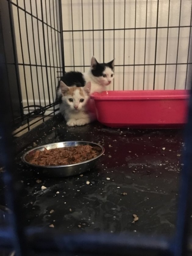 two kittens in a crate