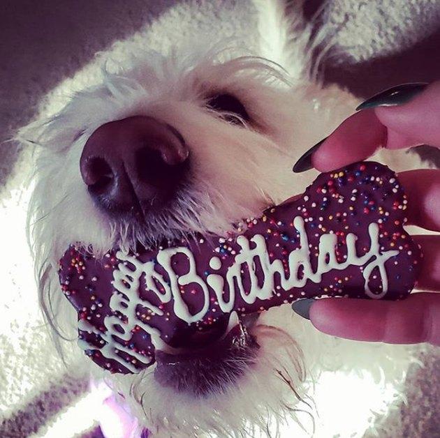 dog with a birthday bone treat