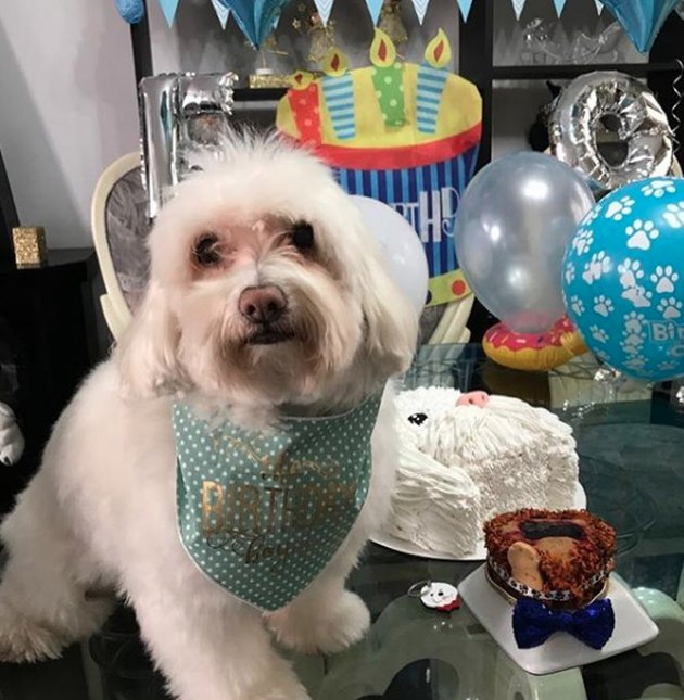 dog surrounded by cake and balloons