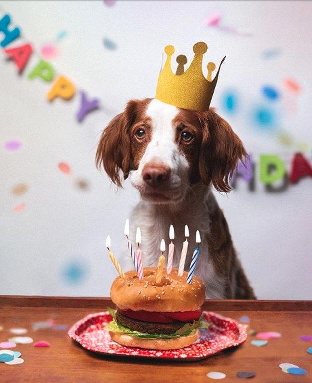 dog enjoying a hamburger cake