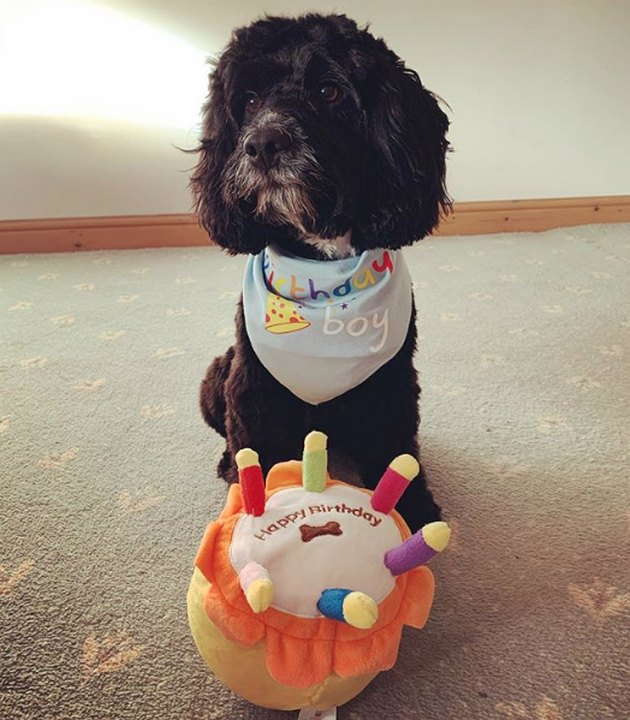 dog with fake birthday cake