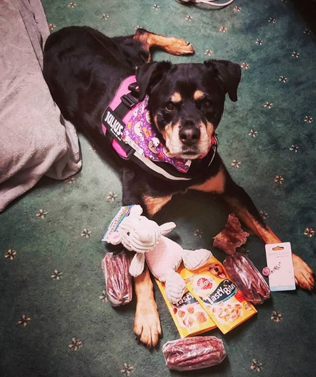 a dog with birthday toys