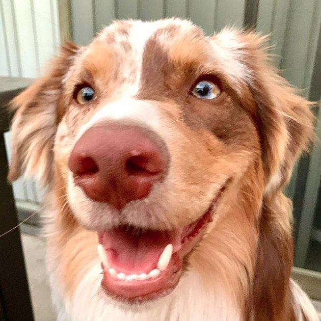 close up of smiling dog