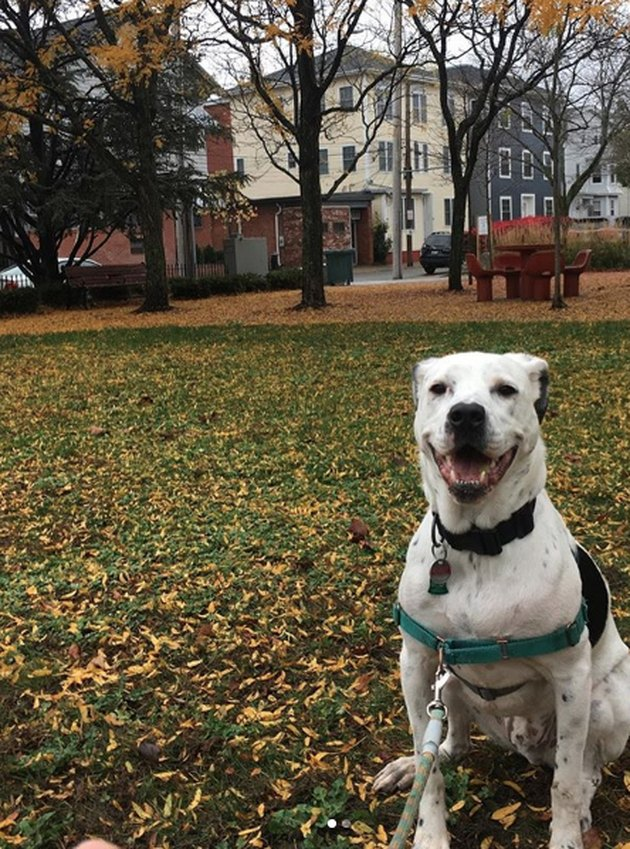 smiling dog during fall