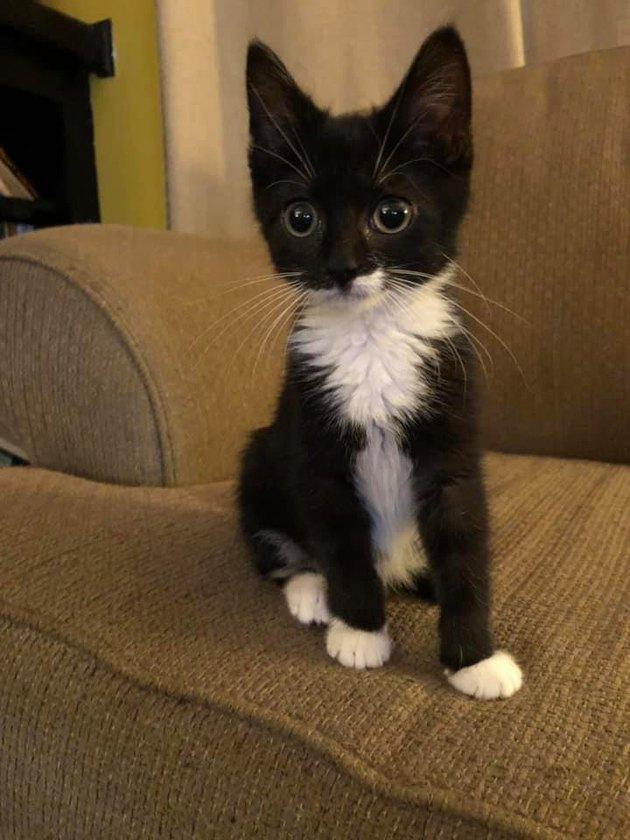 cat named Baron Rooster von Taternoggin