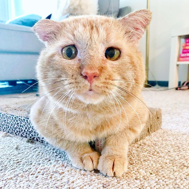 cat named Bruce Willis