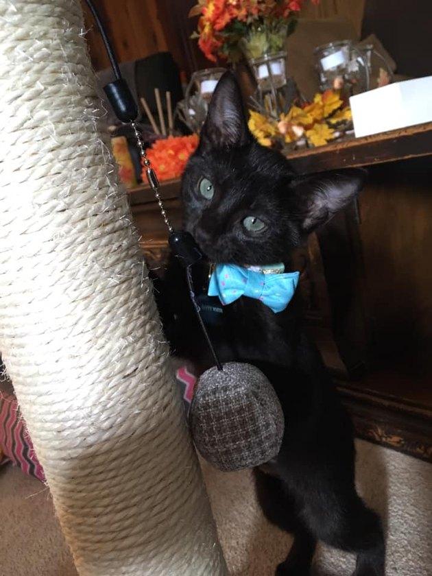 cat named Batty White