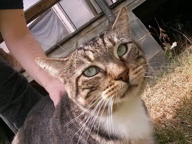 cat named ThunderCleese Magilicutty