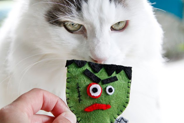 Franken-catnip