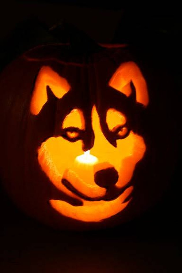 Jack'o'lantern with a Husky's face carved into it.