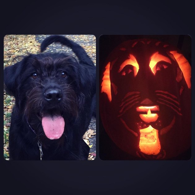 Side-by-side comparison of a dog and its jack'o'lantern counterpart.