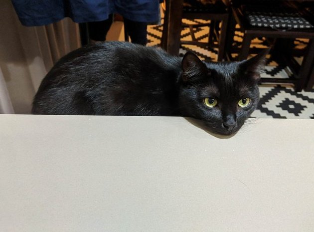 cat rests head on counter she's not allowed to be on