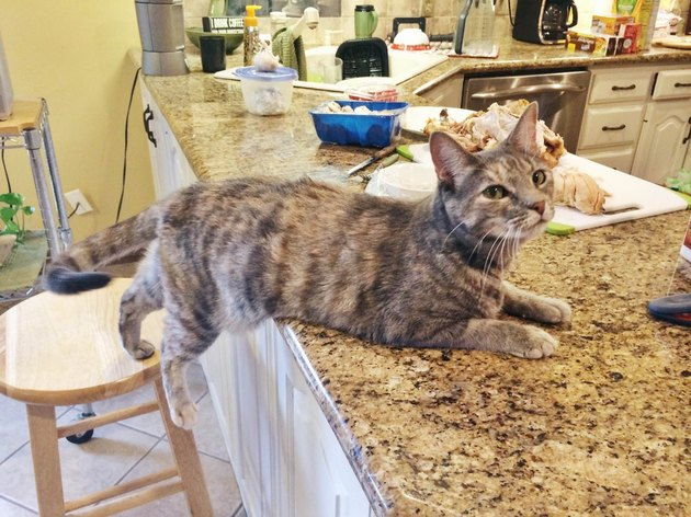 cat not allowed on counter edges onto counter