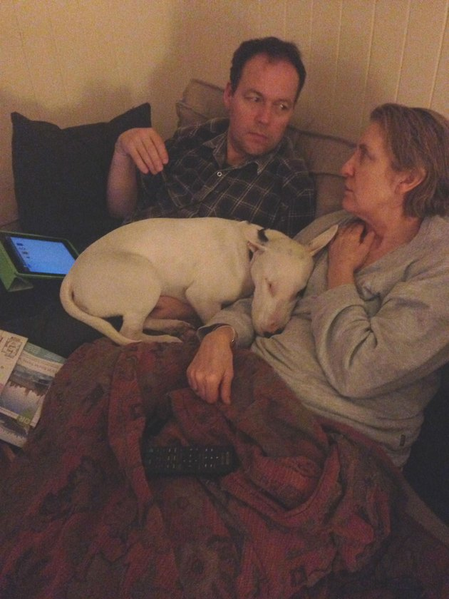 dog cheats no couch rule by napping on both of his humans
