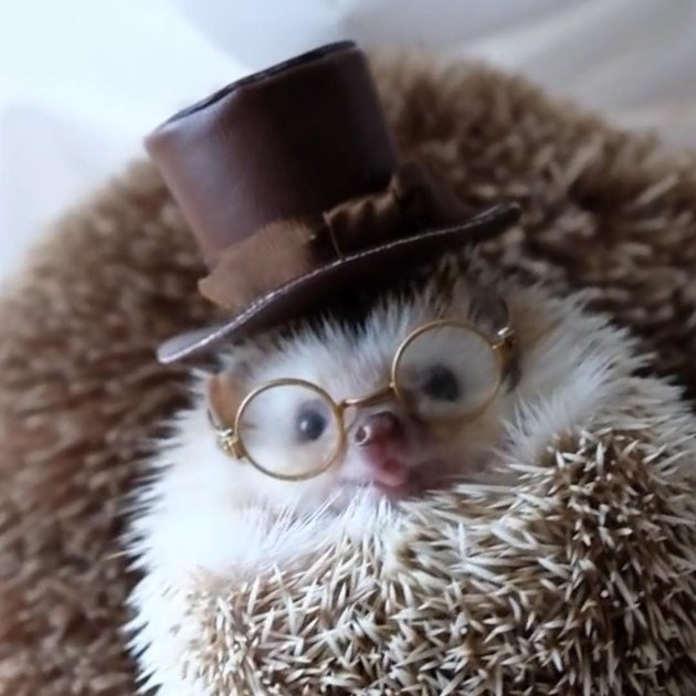 Hedgehog wearing a top hat and glasses.