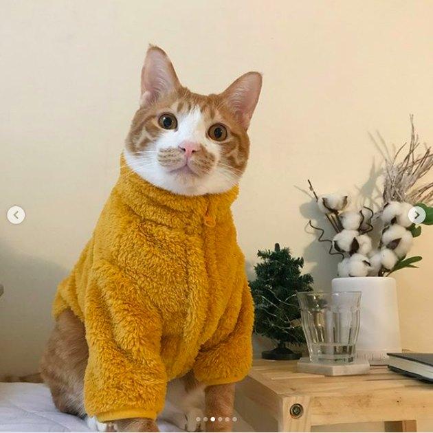 cat wearing a onesie